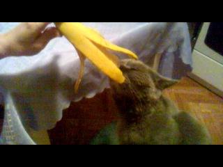 Как кошка банан ест))