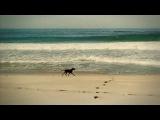 KAFFEIN feat Al Jet - All That She Wants (DJ Nejtrino &amp DJ Stranger Remix)