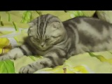 Котик резко уснул)))