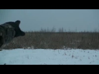 охота на сибирскую косулю загоном.