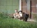 Микки-Маус раскидал всех котов ))