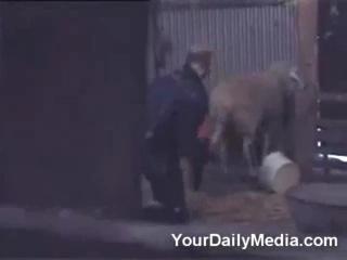 Ахахаха овце голову в жопу засунул)))