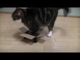 Кот, котик, прикол, смешно, мило, эксперимент, забавно, до слез, Мару :)