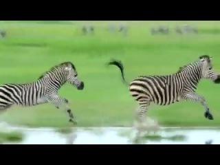 Красивый ролик о природе телеканала National Geographic