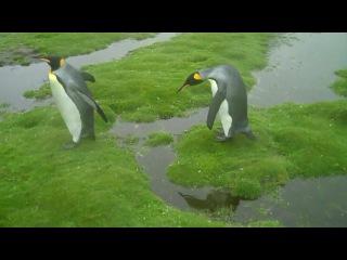 Pingwiny mają problem -)