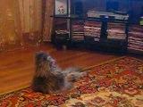 кот, Маша и Медведь, мультики, прикольно, прикол, ржака, котик, кот смотрит мультик, милый кот, мило :)