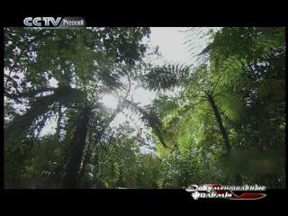CCTV - Видео блог на русском языке - Путешествия в Китай - Цикл «Остров сокровищ в Южно-китайском море» («Хозяин тропических дож