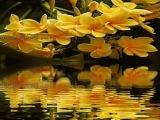 Живые цветы-живая природа-красивая музыка