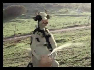 Кунг фу корова