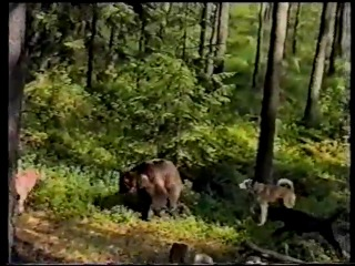 Охота на медведя 0002 0001