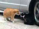 Говорящие кошки кричит на бедную кошку