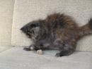 Штуша-Кутуша - страшный зверь. На самом деле мааленький котенок