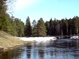 Река Оредеж в Сиверской во время весеннего паводка