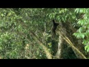 BBC. Тропический рай Борнео. 2007 1серия  KINObars.ru