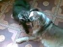 Моя кошка Нюша