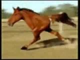 Лошадка игого