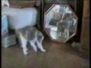 супер смішні котики