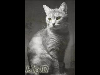 Моему Угольку,Белке с Чернолапом и котам любящим свои половинки