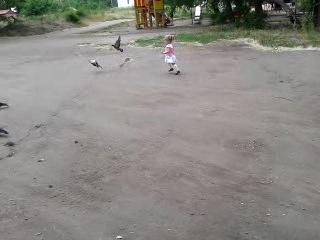 секрет гоняния голубей раскрыт)