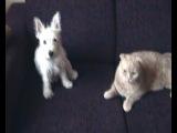 Мои кот Чубайс  и собачка Лиза