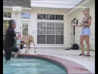 Переводчик с собачьего 2: ДВА НЕМ ДОГА Оптимус с Джиги, СИССИ -  ИСПУГАННАЯ ОВЧАРКА ( ПОМЕСЬ) С ПРИЮТА