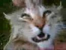 Кот пает