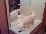 Кот, котик, смех, до слез, прикол, белый кот :)