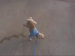 собака-обоссака.....