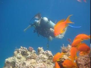 Дайвинг.  мое первое погружение с аквалангом в красном море.
