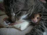 Фильм: Кот кузенька и дом летающего хомяка