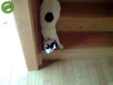Жидкий кот:D