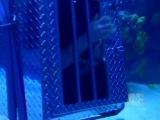Criss Angel Mindfreak (12 серия третьего сезона) Утонувший