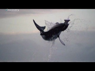 MusVid.NET | Видео | белая акула | Страница 4