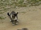 Кот - истребитель гадов