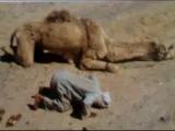 Фото условиях мусульман в молитве во всем мире с очень красивой Нашид
