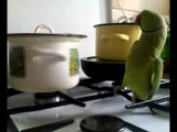 Попугай на кухне. (прикол)