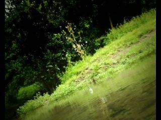 Букашки | Minuscule - La chenille qui voulait voir la mer ( 2 сезон )