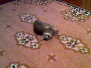 безконтактный удар или индийское кино(моя любимая кошка)