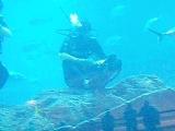 Артур плавает с акулами смотрите на 2:22 будет самая большая