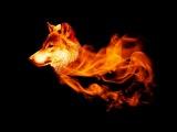Ryan Davis - The Wolve (Max Cooper Remix)