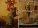 Мои домашние забавные животные, Лиза и попугай Кеша