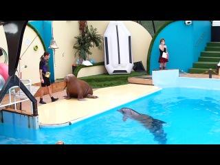 Ростовский дельфинарий ) даже моржи качают пресс