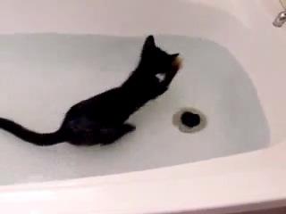 котей-водолюб