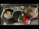 укуренные мыши