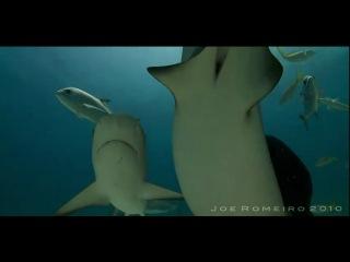 В окружении акул!!! / приколы с животными