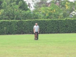 Жан Клод Ван Дамм и его собаки
