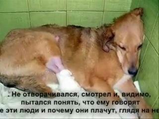 История собаки