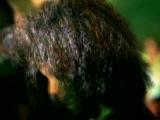 Paul Oakenfold feat. Shifty Shellshock - Starry Eyed Surprise