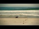 Kaffein feat. Al Jet - All That She Wants (Dj Nejtrino &amp Dj Stranger Remix) 2011