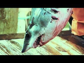 2011 The Shark-Free Marina Initiative - Celebrity PSA